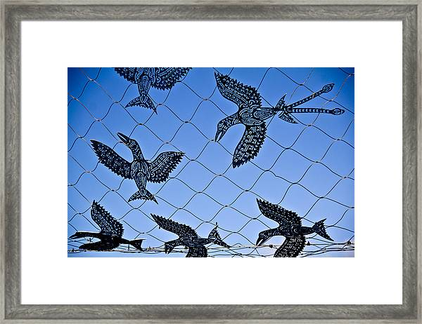 Framed Print featuring the photograph Birds Of Paradise Caught In A Net by Debbie Cundy