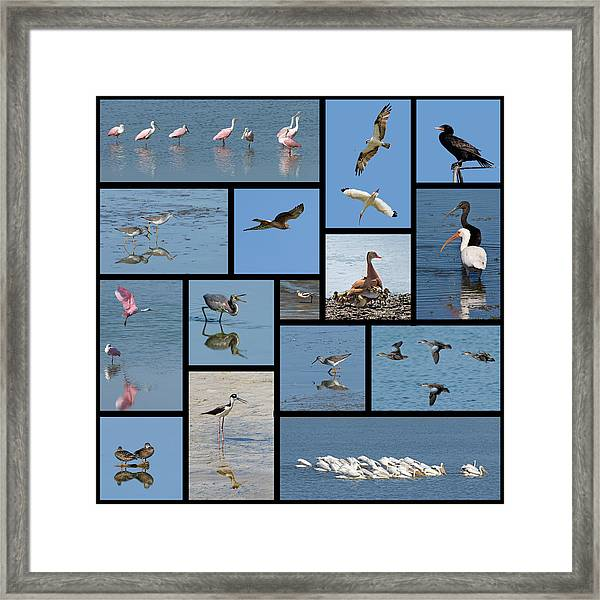 Birds Of The Click Ponds Framed Print