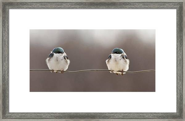 Birds On A Wire Framed Print by Lucie Gagnon