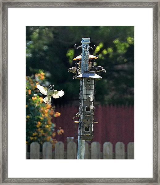 Birds03 Framed Print