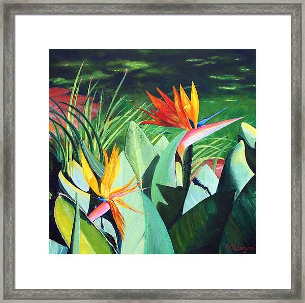 Birds...in Paradise Framed Print