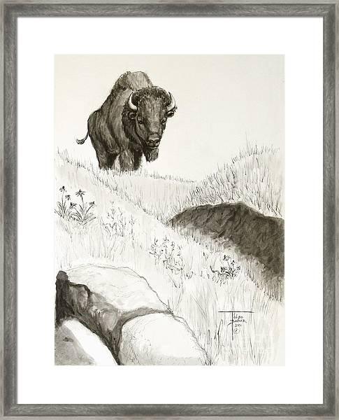 Bison Approach Framed Print