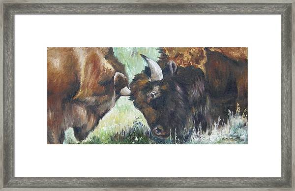 Bison Brawl Framed Print
