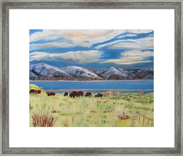 Bison On Antelope Island Framed Print