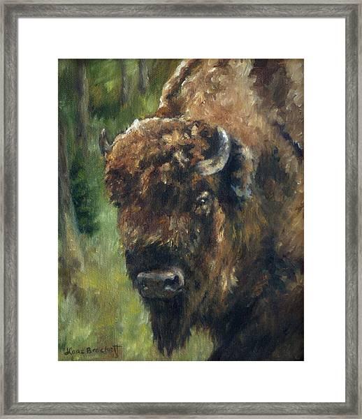 Bison Study - Zero Three Framed Print