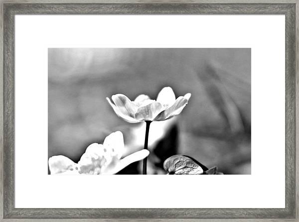 Black And White Beauty Framed Print