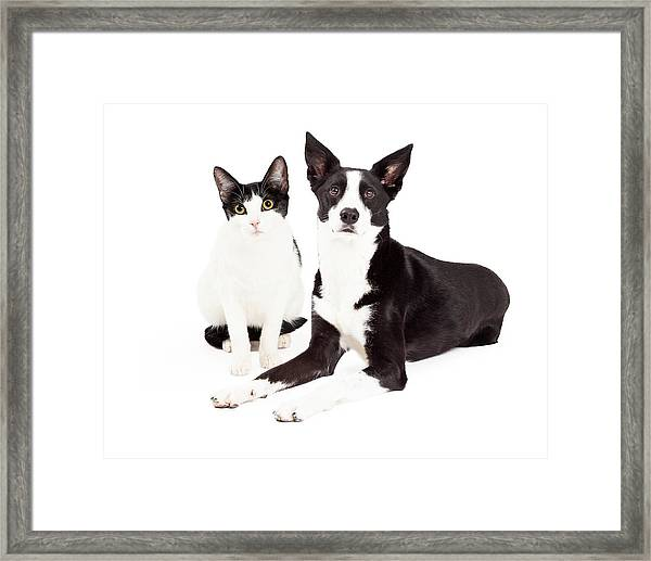 Black And White Cat And Dog Framed Print