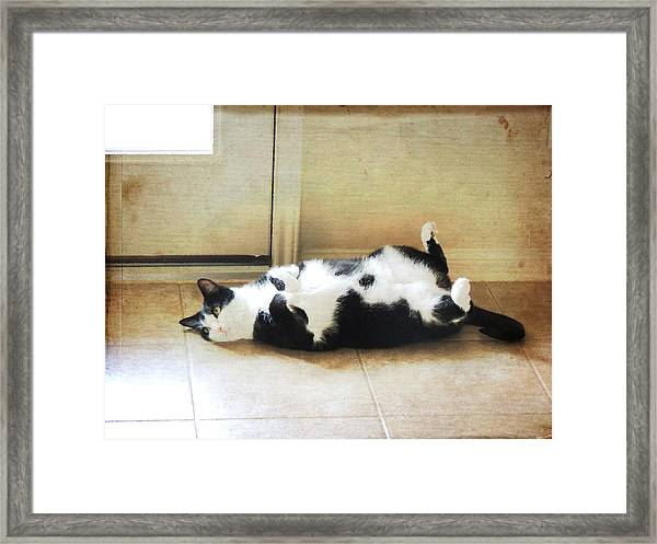 Black And White Cat Reclining Framed Print