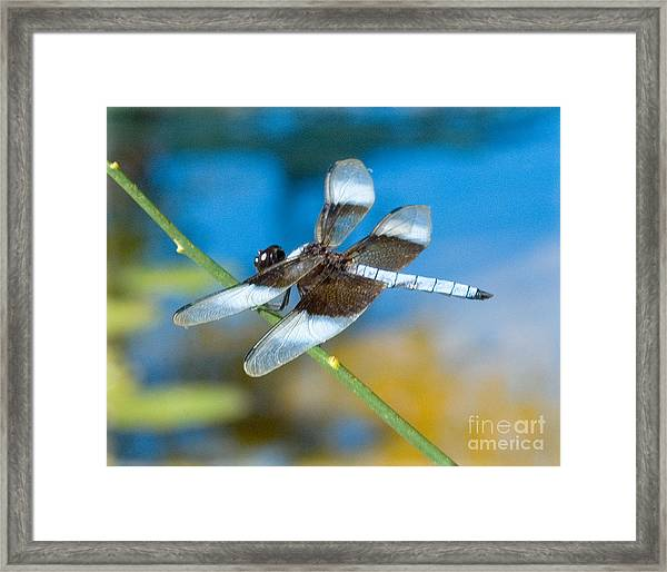 Framed Print featuring the photograph Black And White Dragonfly by Mae Wertz