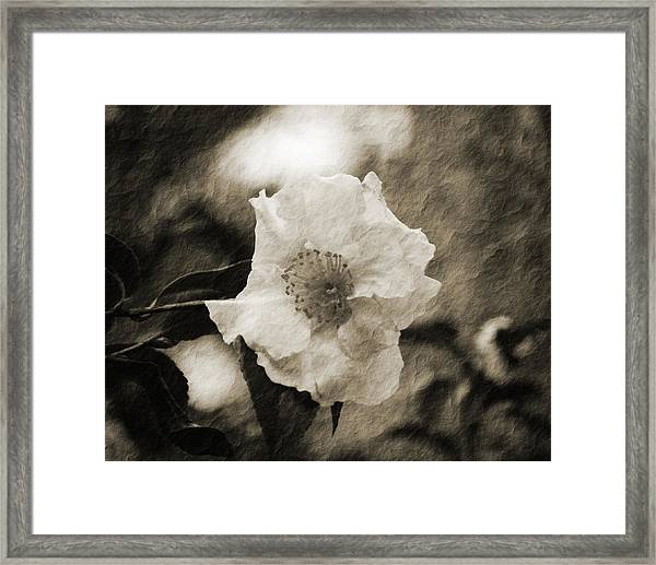 Black And White Flower With Texture Framed Print