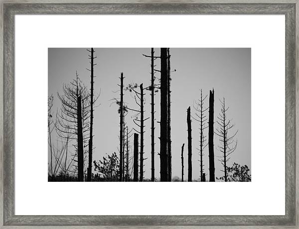 Black And White Forest 1 Framed Print