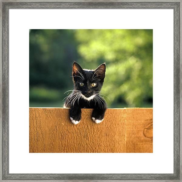 Black And White Kitten Peering Over Top Framed Print