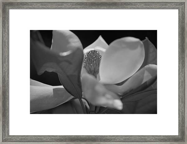 Black And White Magnolia Framed Print