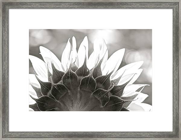 Black And White Sunflower Framed Print