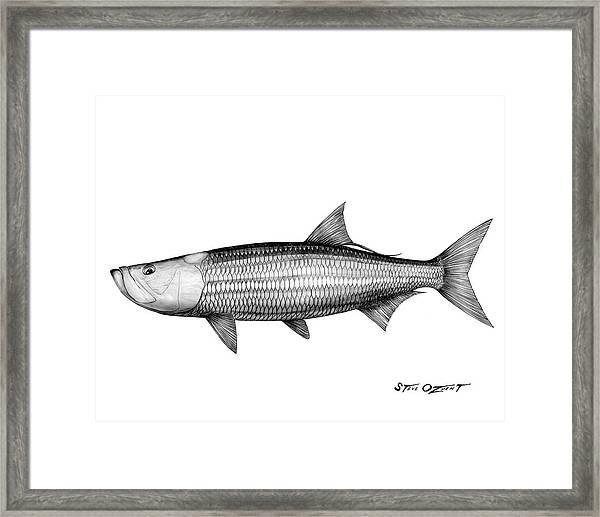 Black And White Tarpon Framed Print
