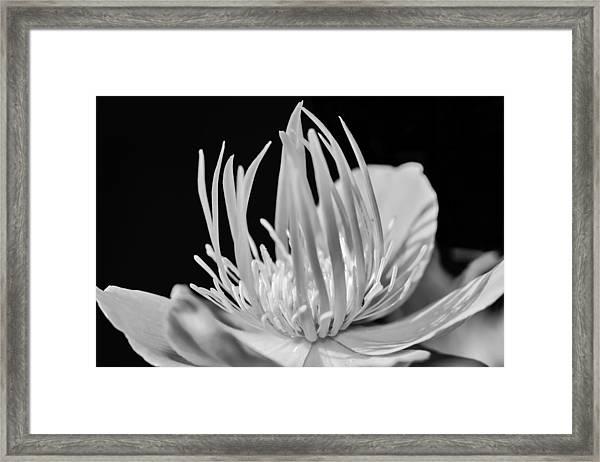 Black And White Universe Framed Print