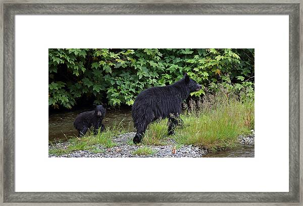 Black Bear And Cub Framed Print