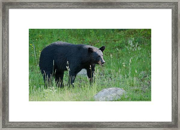 Black Bear Female Framed Print