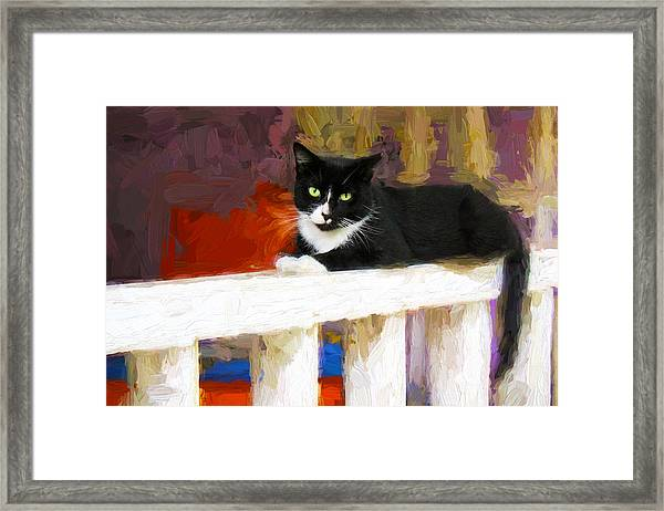 Black Cat In Color Series 2 Framed Print