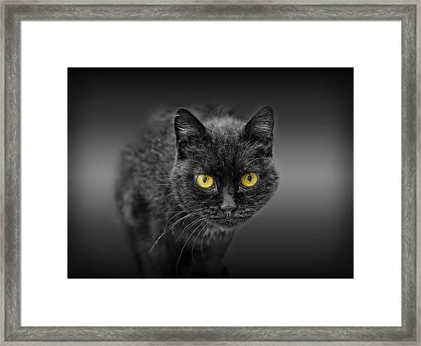 Black Cat Framed Print