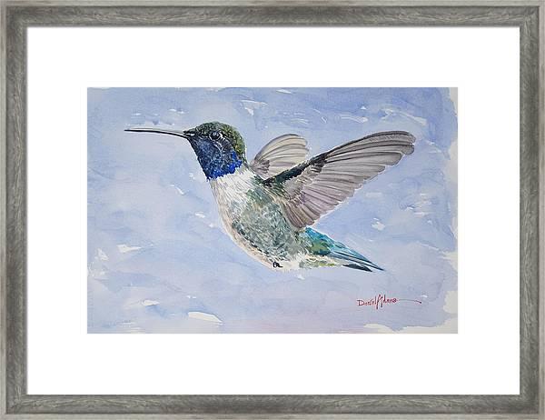 Da194 Black Chinned Hummingbird By Daniel Adams Framed Print