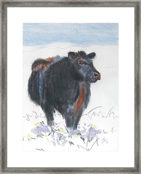 Black Cow Drawing Framed Print