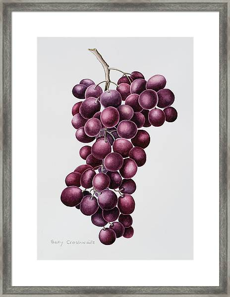 Black Grapes Framed Print