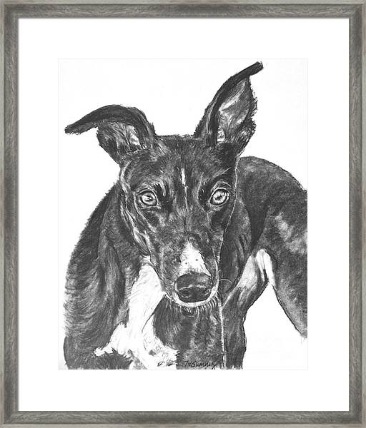 Black Greyhound Sketch Framed Print