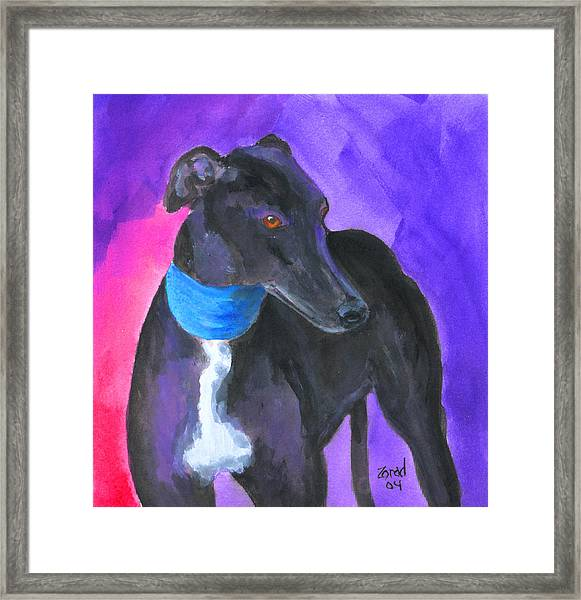 Black Greyhound Watercolor Framed Print by Mary Jo Zorad