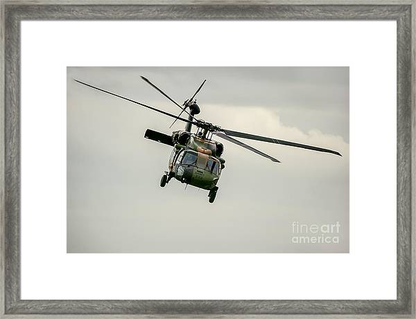 Black Hawk Swoops Framed Print