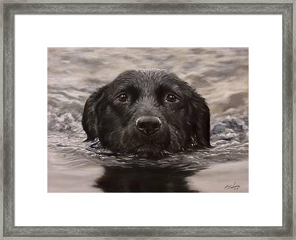 Black Labrador Portrait II Framed Print