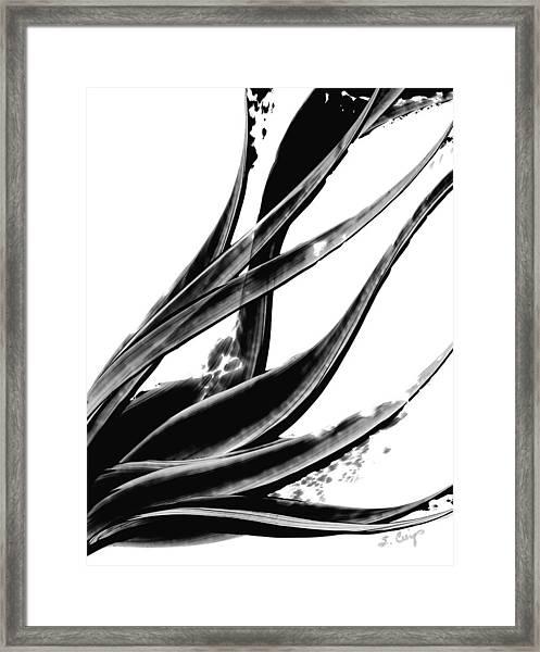 Black Magic 303 By Sharon Cummings Framed Print