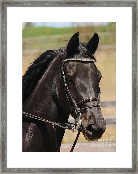 Black Mare Portrait Framed Print