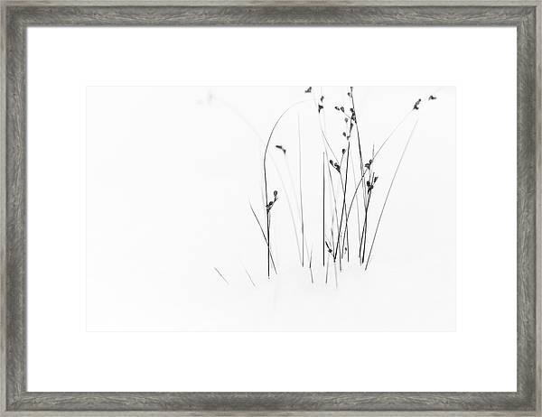 Black On White Framed Print