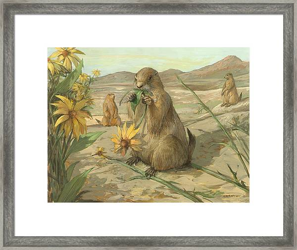 Black-tailed Prairie Dogs Framed Print by ACE Coinage painting by Michael Rothman