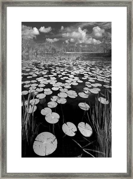 Black Water Framed Print