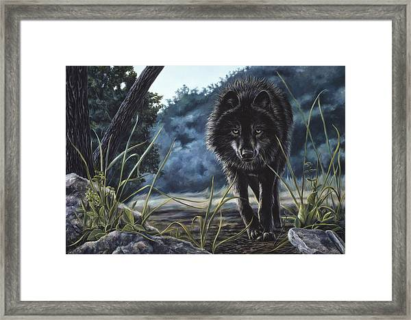 Black Wolf Hunting Framed Print