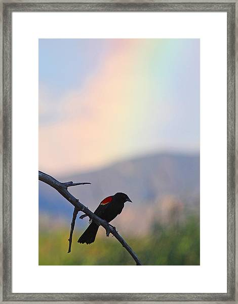 Blackbird In Front Of Rainbow Framed Print by Brian Magnier