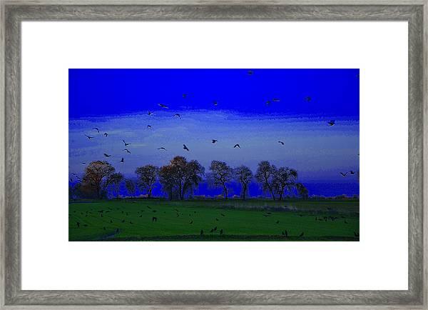 Blackbird Singing... Framed Print