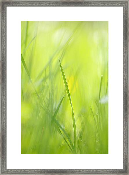 Blades Of Grass - Green Spring Meadow - Abstract Soft Blurred Framed Print