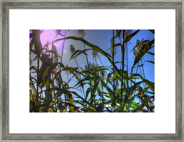 Blazing Rays Framed Print