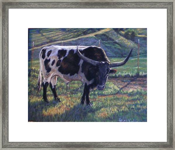 Blk And White Longhorn Steer Framed Print