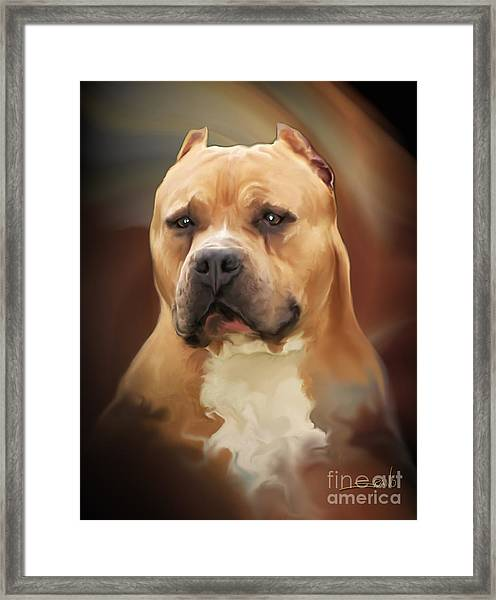 Blond Pit Bull By Spano Framed Print