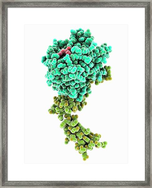 Blood Coagulation Factor Xa Molecule Framed Print