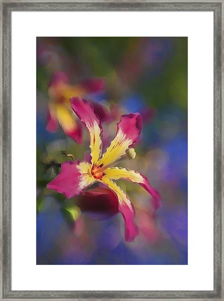 Bloomin Hong Kong Orchid Framed Print