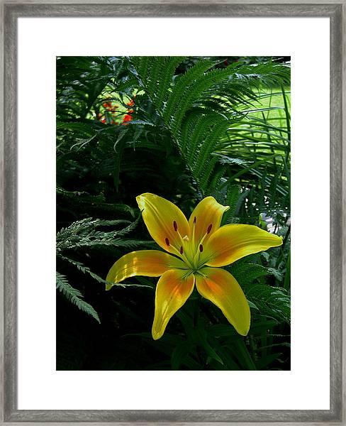 Bloomin Wonder Framed Print by Larry Jones