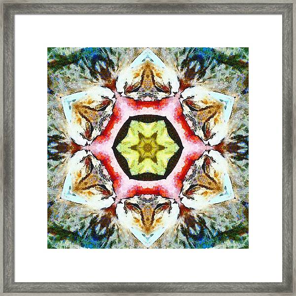 Blooming Fibonacci Framed Print