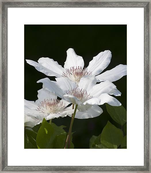 Blooming In Spring Framed Print