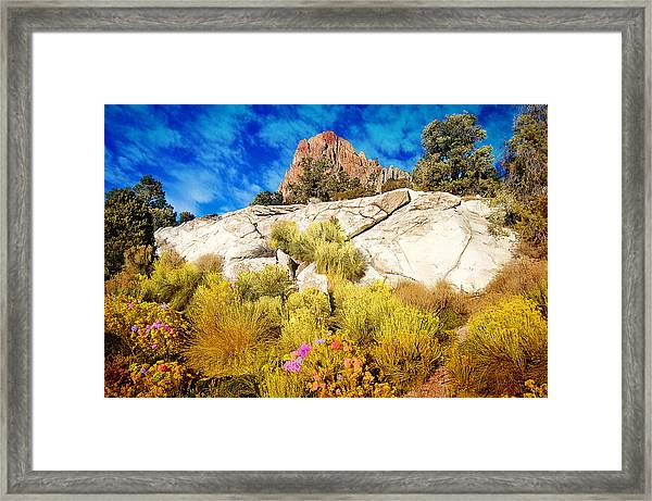Blooming Nevada Desert Near Ely Framed Print