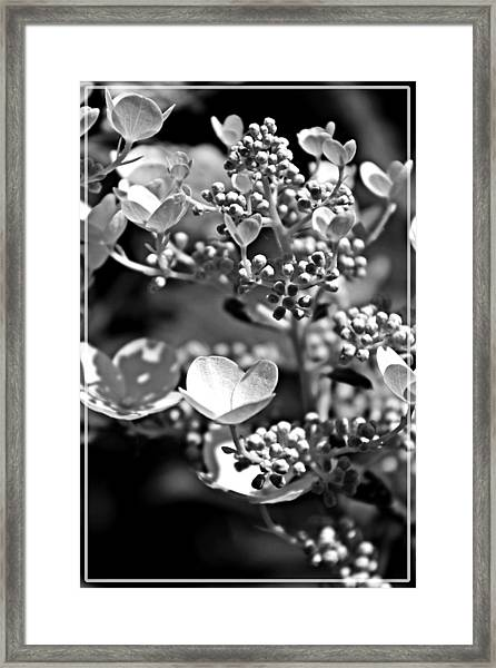 Blooms And Berries In Black And White Framed Print